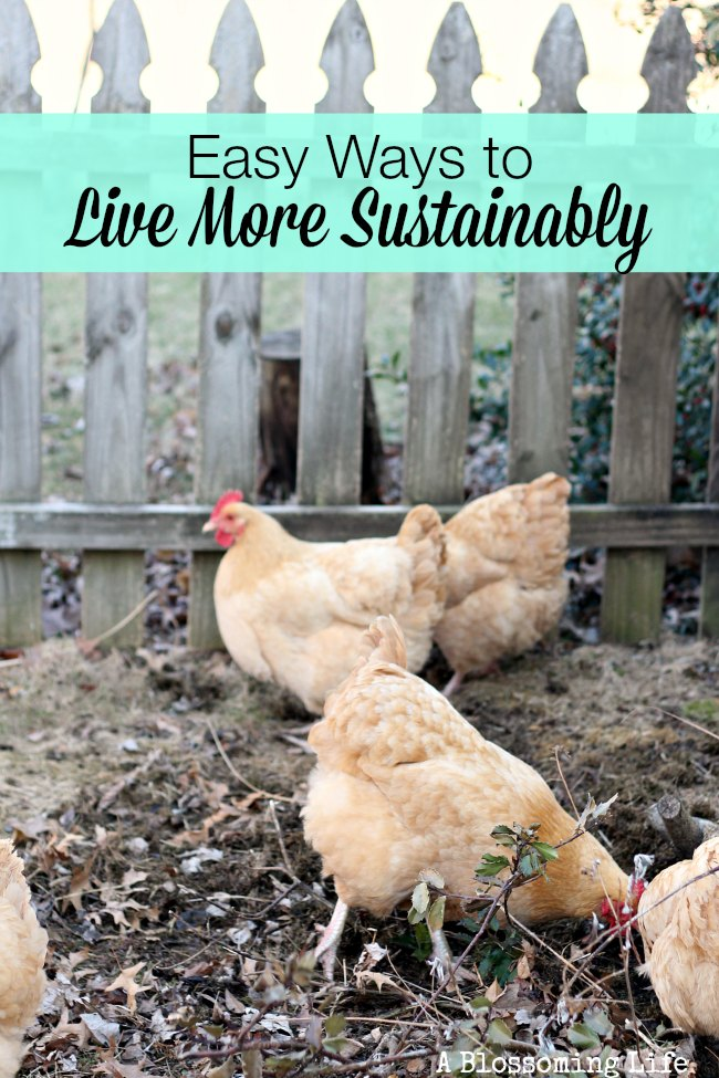 easy ways to live more sustainably
