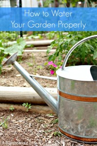 How to Water Your Garden Properly