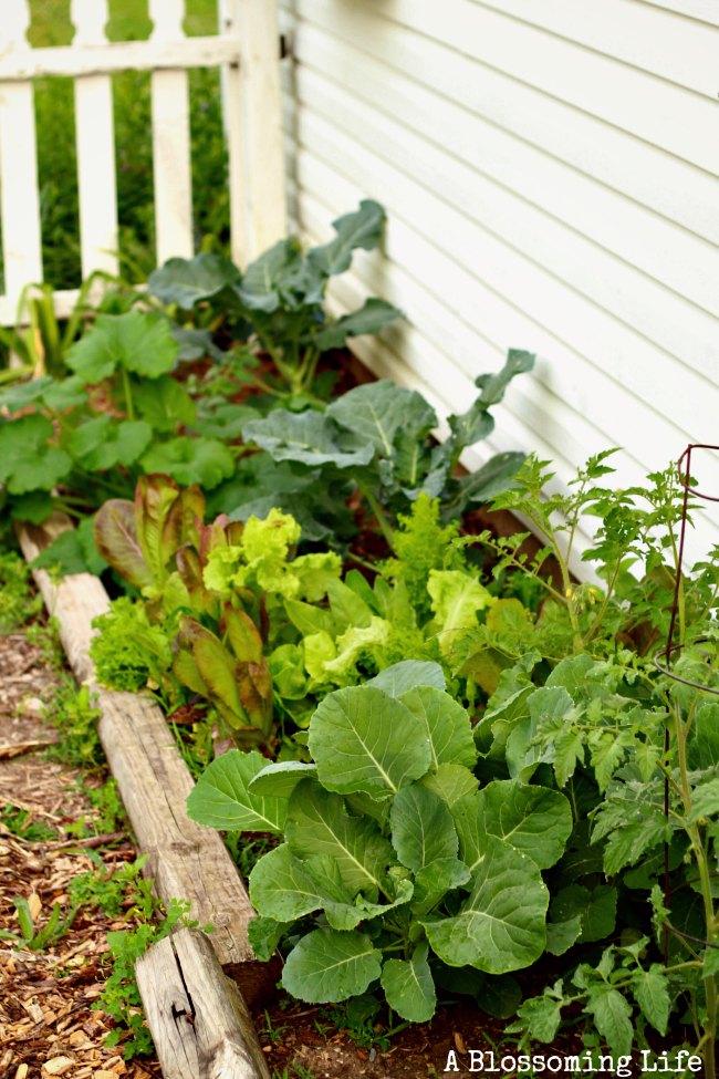 garden planted 2