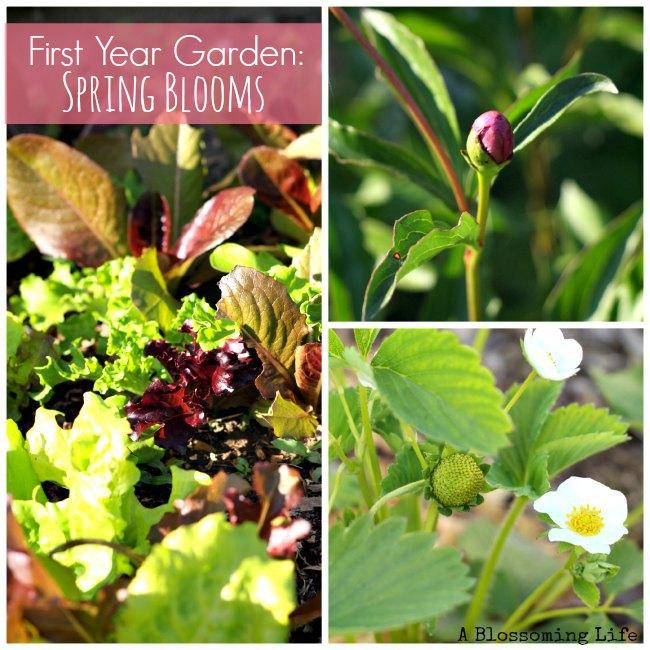 garden spring blooms