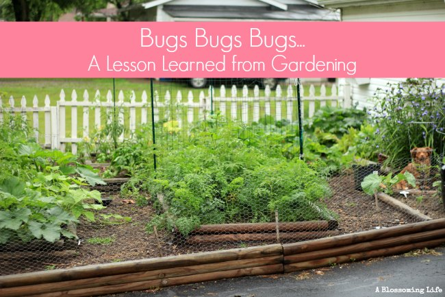 Bugs bugs bugs… A Lesson Learned from Gardening