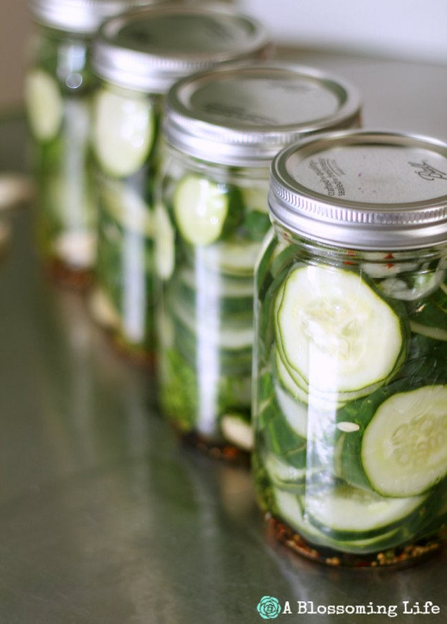 Homemade {Claussen Like} Refrigerator Pickles -
