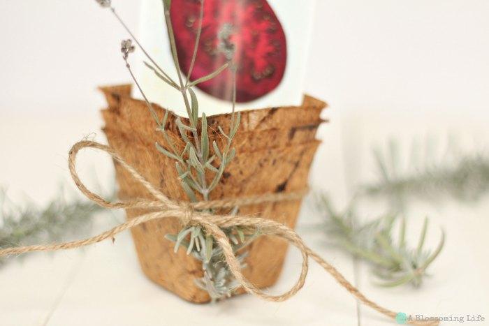 Gardening Seed Gift