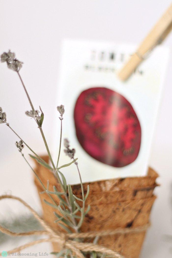 Seed Gift Set
