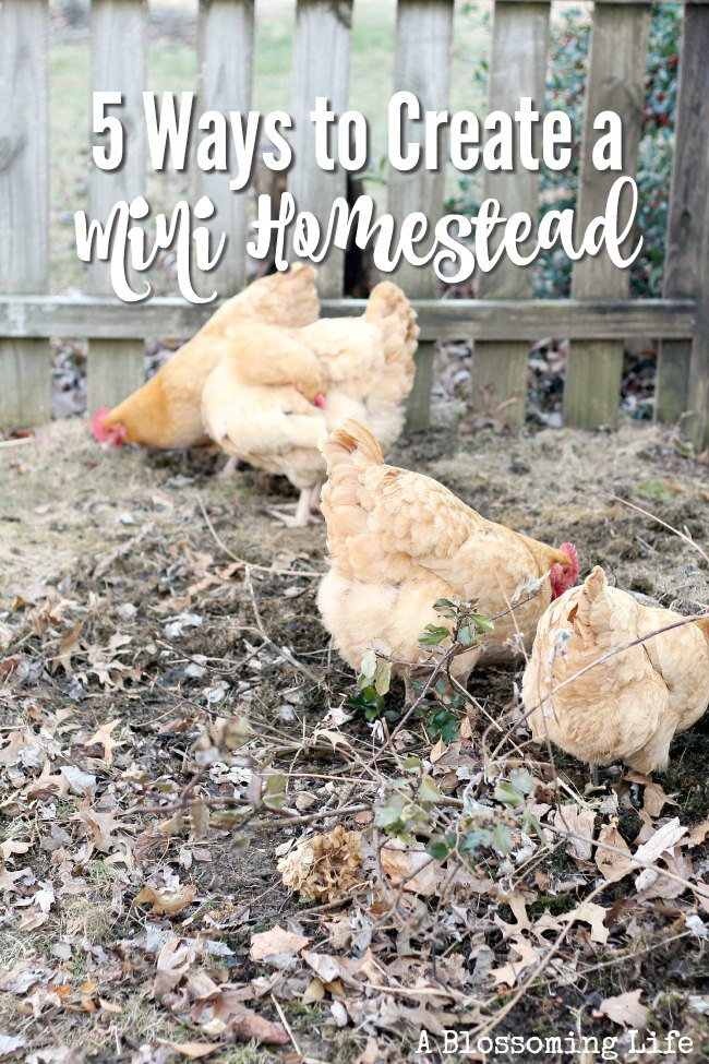 5 Ways to Create a Mini Homestead