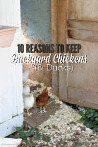 10 Reasons To Keep Backyard Chickens (And Ducks)