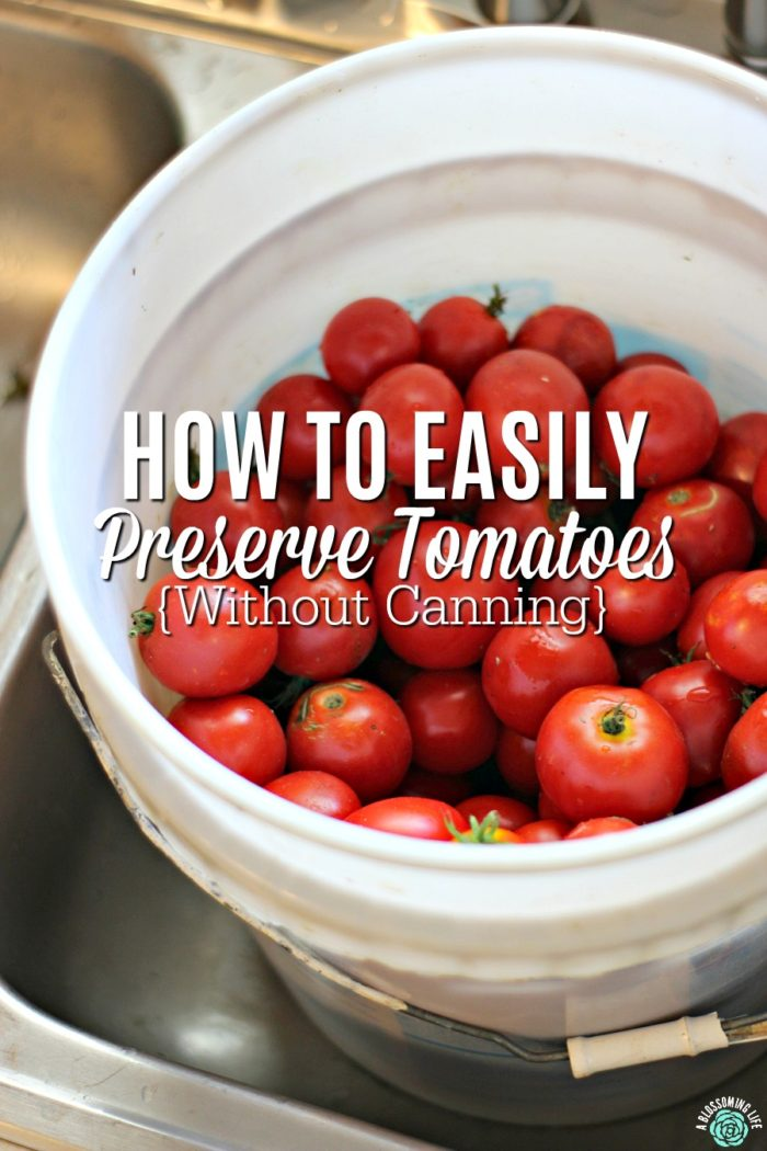 white bucket full of fresh picked tomatoes to be preserved by freezing