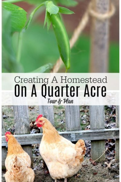 Creating A Homestead On A Quarter Acre – Tour And Plan