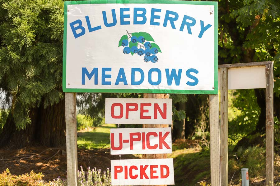 Blueberry Meadows sign